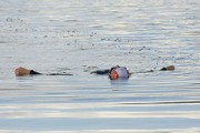 A swimmer floats on their back at the end of the swim